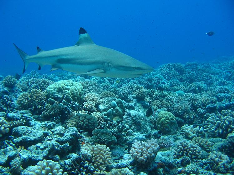 http://tahitivoileetlagon.com/wp-content/uploads/2014/12/plongee_02.jpg