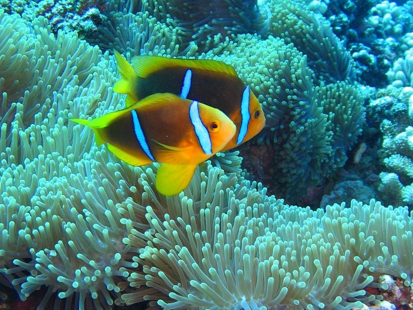 http://tahitivoileetlagon.com/wp-content/uploads/2015/10/Plongee_011.jpg