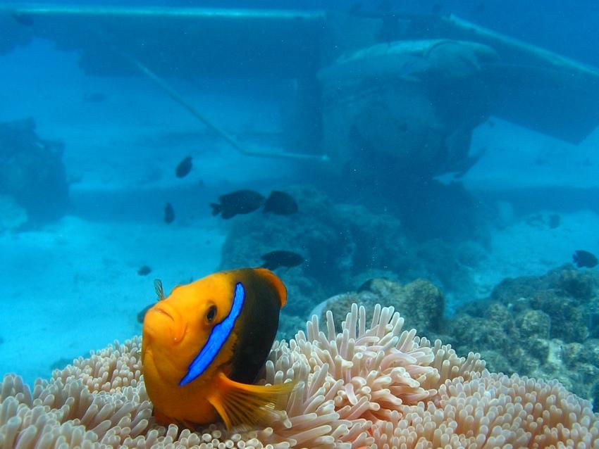 http://tahitivoileetlagon.com/wp-content/uploads/2015/10/Plongee_04.jpg