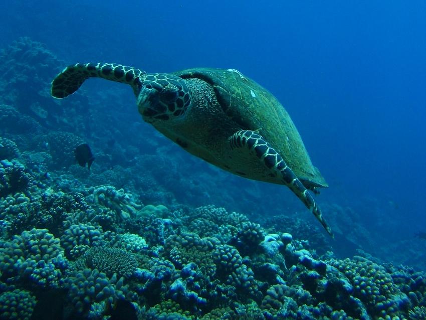 http://tahitivoileetlagon.com/wp-content/uploads/2015/10/Plongee_05.jpg
