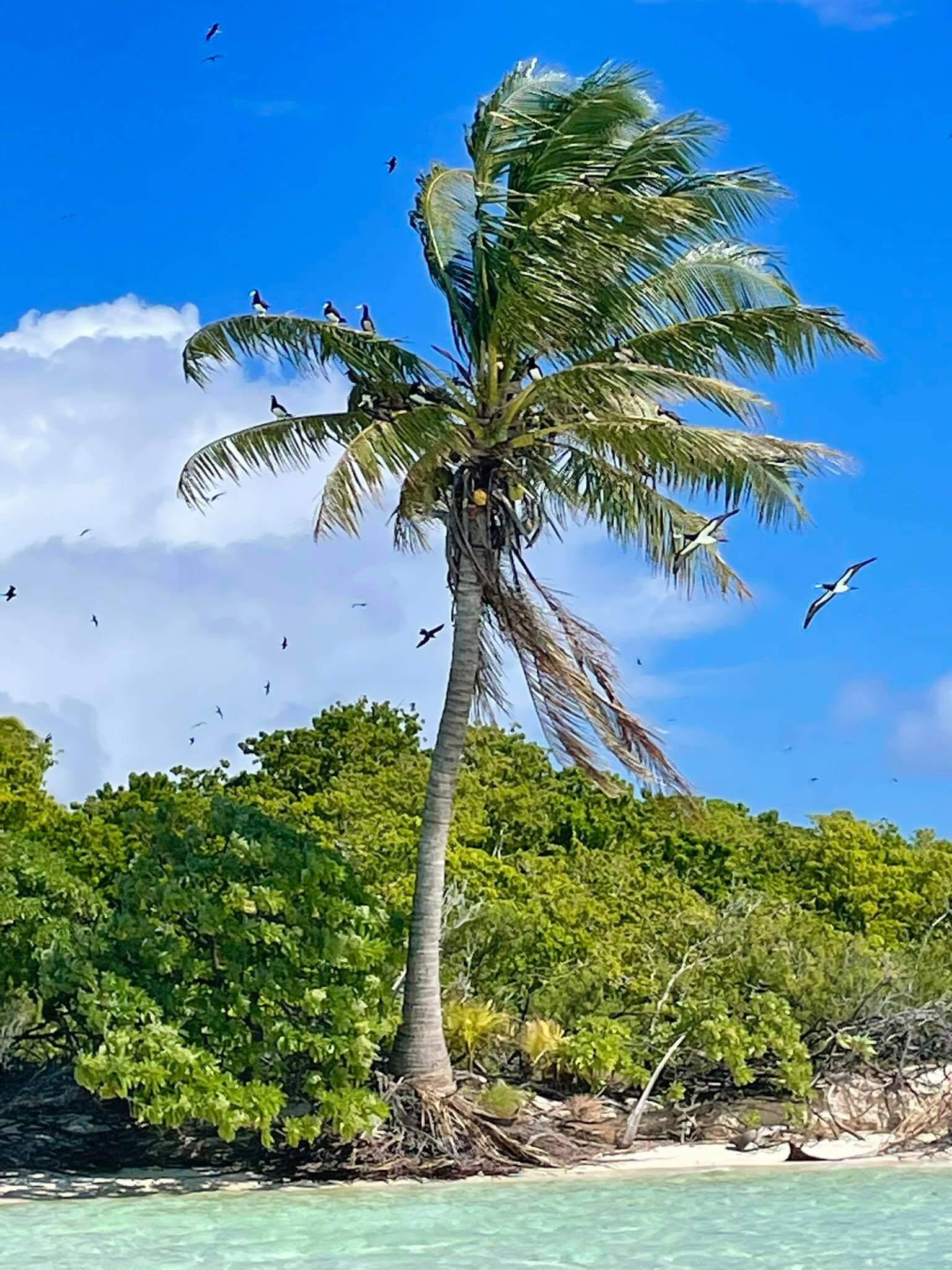 http://tahitivoileetlagon.com/wp-content/uploads/2021/07/arbre-aux-oiseaux-TETIAROA.jpg