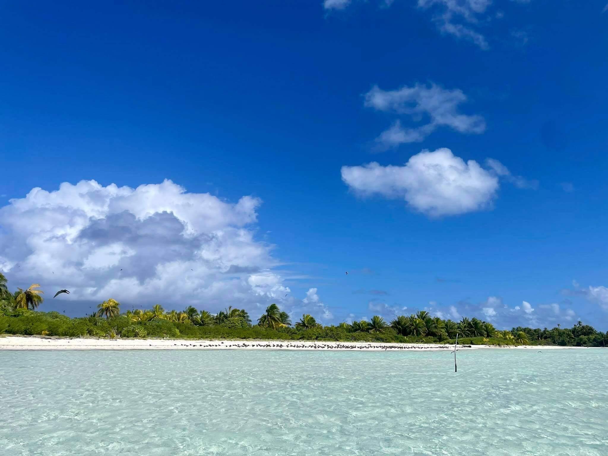http://tahitivoileetlagon.com/wp-content/uploads/2021/07/oiseaux-motu-TETIAROA.jpg