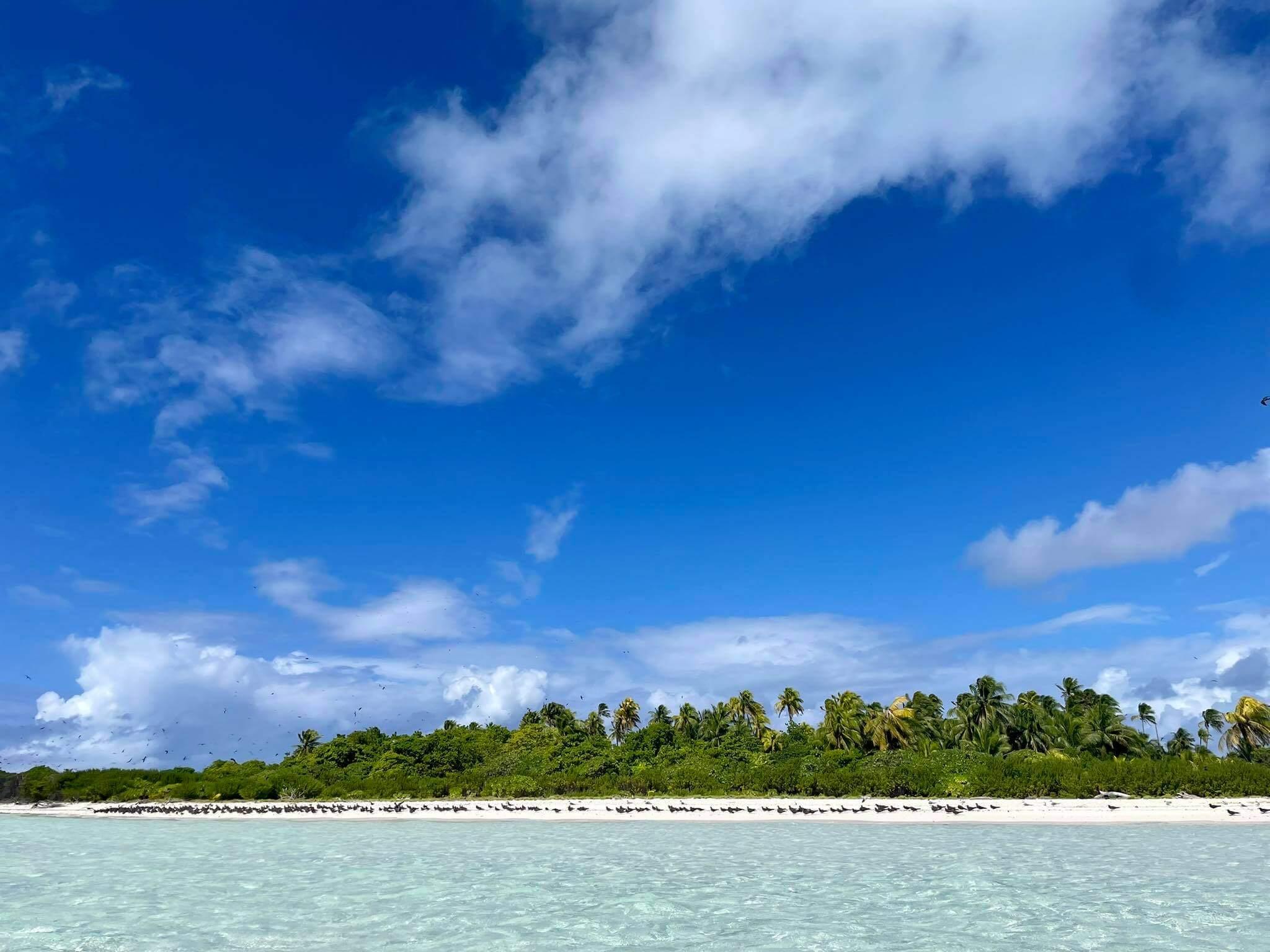 http://tahitivoileetlagon.com/wp-content/uploads/2021/07/plages-oiseaux-TETIAROA.jpg