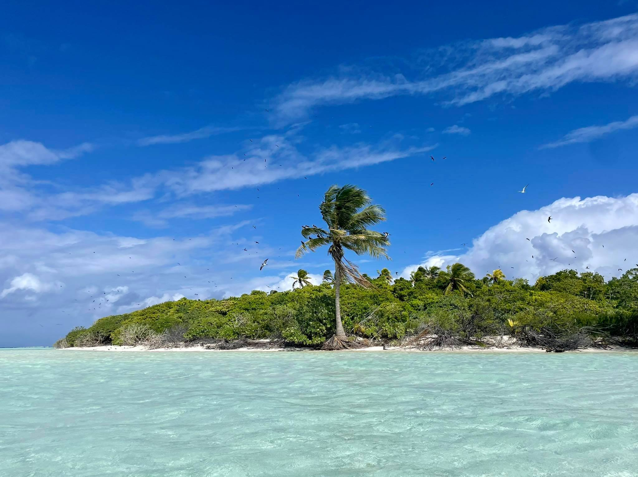 http://tahitivoileetlagon.com/wp-content/uploads/2021/07/vol-oiseaux-TETIAROA.jpg